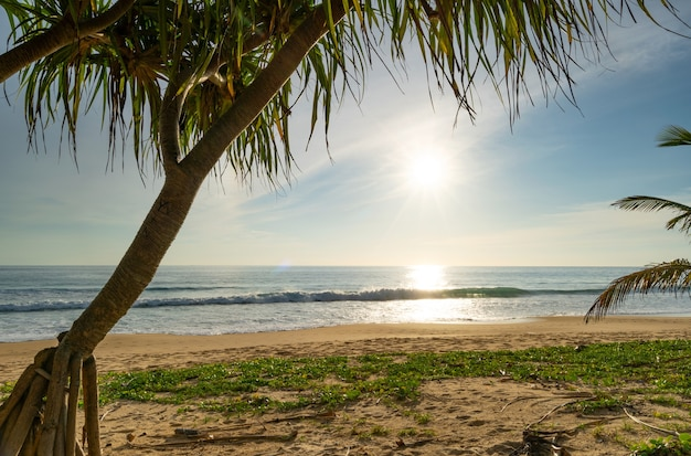 화창한 날에 아름 다운 바다 코코넛 야자수 프레임 덮여 및 모래 해변에서 음영 태국 여행 휴가 배경 개념 태국 푸 켓에서 맑은 하늘이 여름 해변입니다.