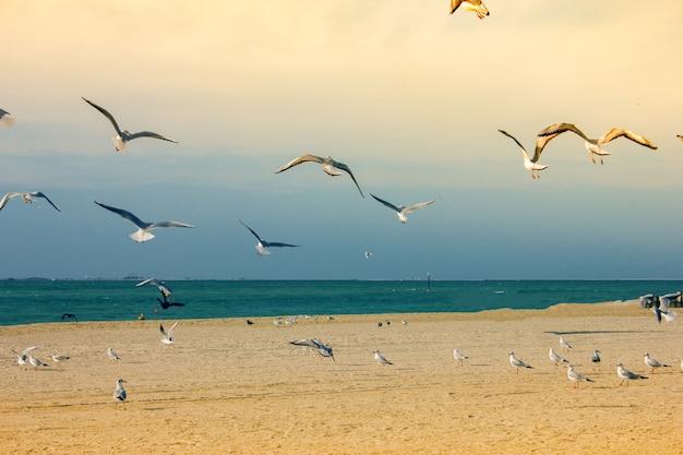 해변 근처에서 날아 다니는 아름다운 갈매기