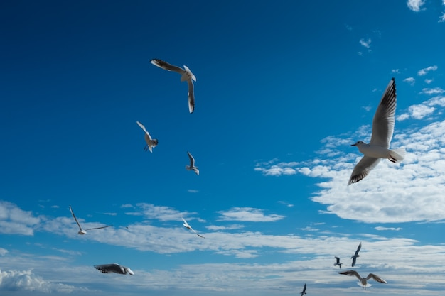 Beautiful seagulls flying in the fall blue sky
