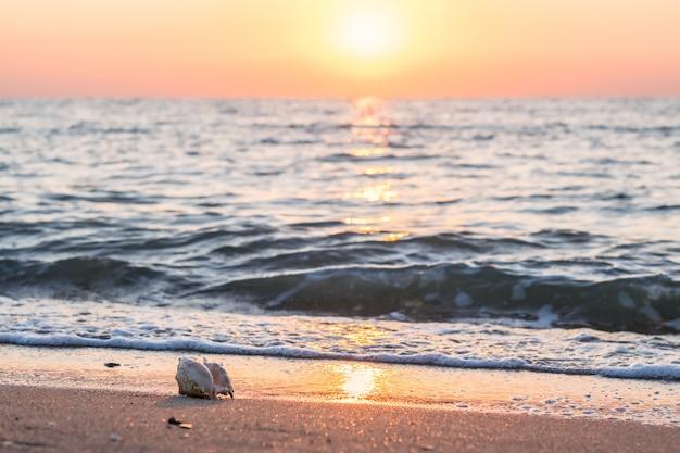 Красивый морской пейзаж с ракушкой на песке и солнце в небе выборочный фокус