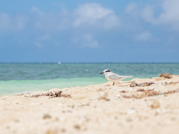 Beautiful seascape with a white bird walking on the shore at new caledonia