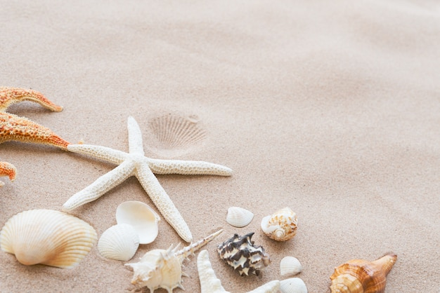 Beautiful seashell and starfish on sandy beach background for summer concept.