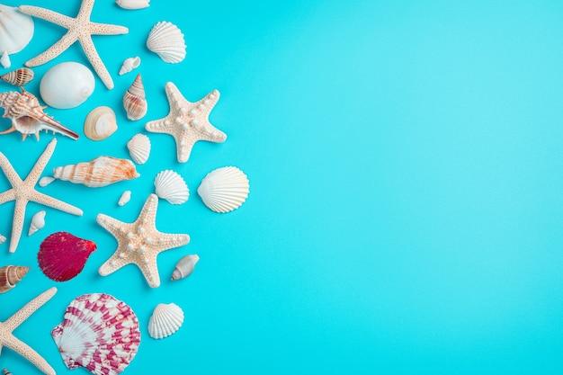 Красивые ракушки и морские звезды на голубом фоне