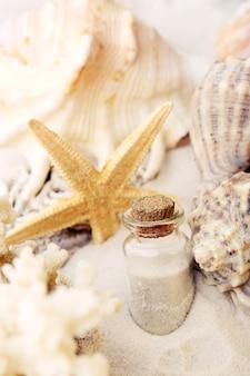 Beautiful seashells on sand
