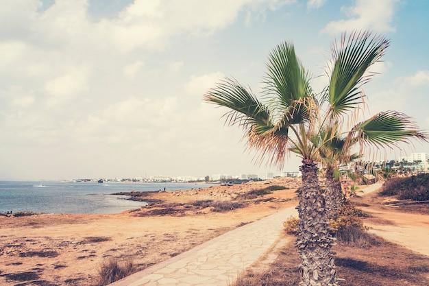暑い夏の日の美しい海辺のリゾート。海岸沿いの細いヤシの木。ヘルスツーリズムとビーチレクリエーションの概念