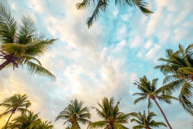 美しい海辺の熱帯のビーチの背景。ココヤシの木と青い空の上の雲。夏休みの背景概念。ヴィンテージトーン