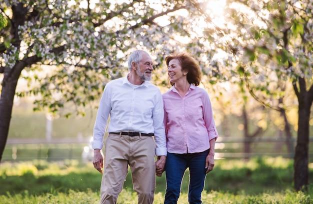 Красивая старшая влюбленная пара на прогулке на улице в весенней природе под цветущими деревьями, ходьба.