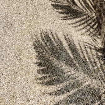 熱帯のココナッツ椰子の枝の美しい影