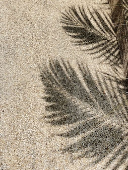 Beautiful shadow of tropical coconut palm branches