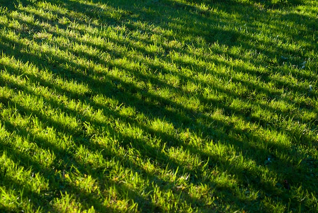 Beautiful shadows on home garden grass. sunset light.