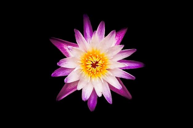 花の美しい形