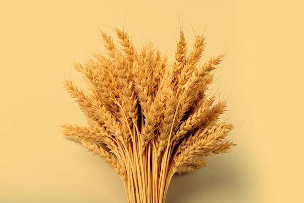 Beautiful sheaf of rye on yellow background. harvesting concept. minimalism.