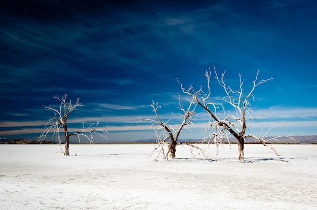 Beautiful shot of 3 frozen bare trees growing in a snowy ground and the dark sky in the background