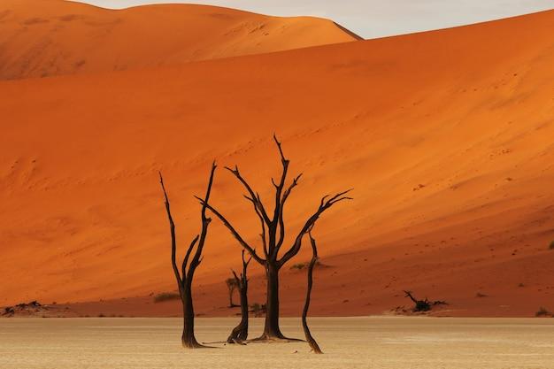 Bellissimo scatto di alberi spogli del deserto con una gigantesca duna arancione