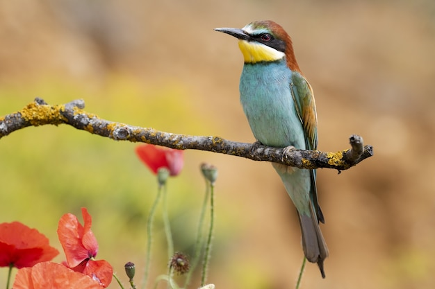 Beautiful shot of a bee-eater bird perched on a branch in the forest