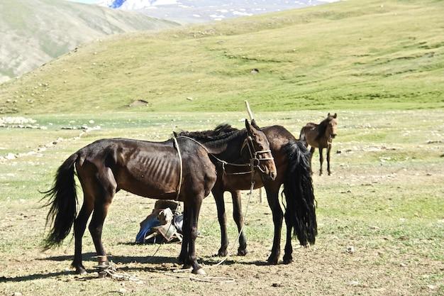 草が茂った丘の上に美しいショット黒と茶色の馬