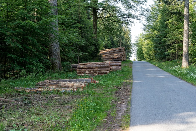 Bellissimo scatto della foresta nera, germania