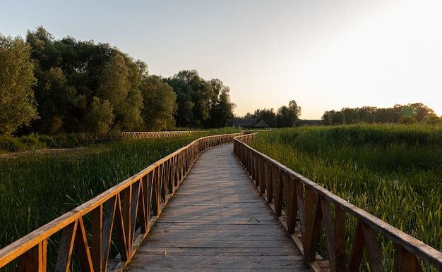 Beautiful shot of a boardwalk in the park surrounded by tall grasses and trees during sunrise
