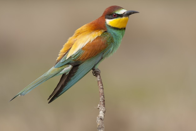 Beautiful shot of a colorful bee-eater perched on a branch of a tree in the forest
