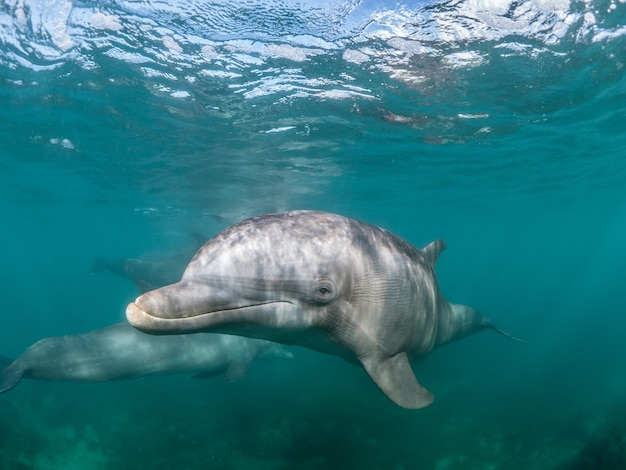 Beautiful shot of a common bottlenose dolphin living his best life under the sea