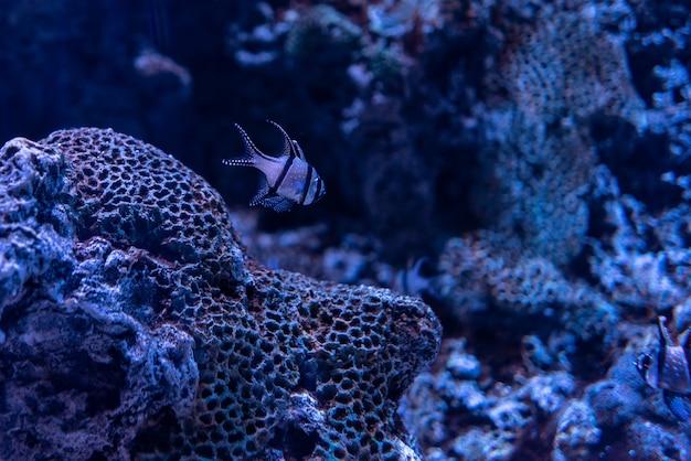 Bella ripresa di coralli e pesci sotto il limpido oceano blu