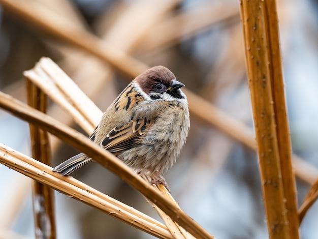 Bellissimo scatto di un simpatico passero in piedi su un ramo nel parco
