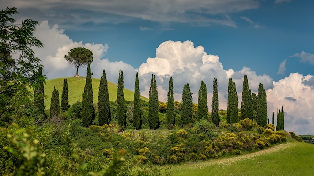 Beautiful shot of cypress trees surrounded by green plants