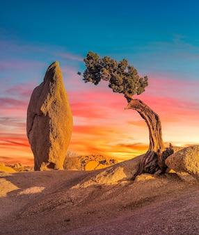 Bellissimo scatto di un'area deserta con un masso e un albero di sabal palmetto isolato