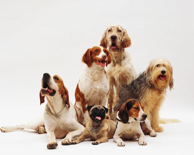 Bel colpo di diverse razze di cani a riposo