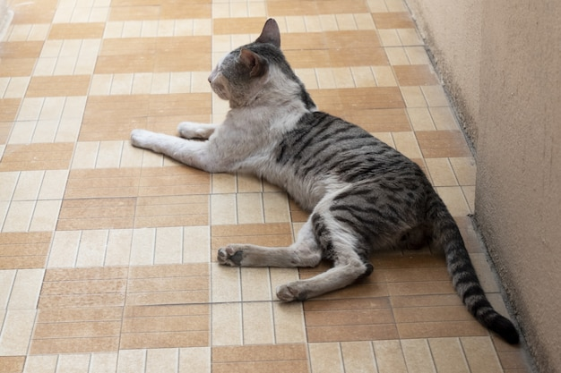 Beautiful shot of a domestic cat resting on a floor tiles
