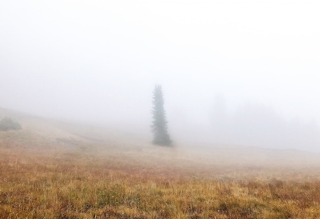 Beautiful shot of a dry grassy field with a tree in the fog