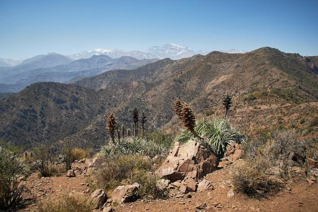 Bellissimo scatto di piante secche e cespugli sulle montagne