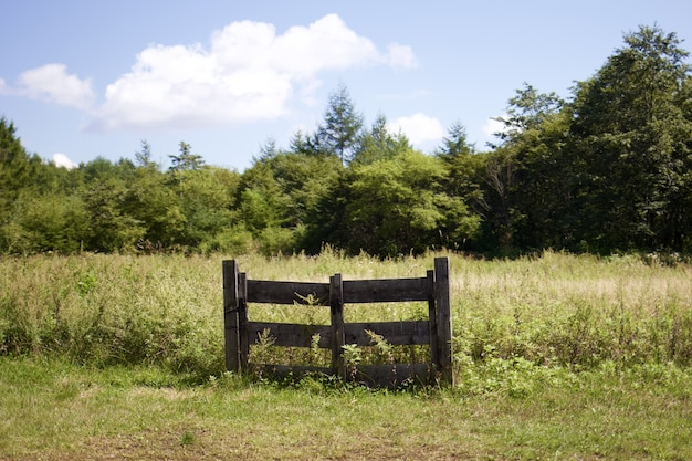 Beautiful shot of a field of grasses with a wooden gate surrounded by green trees