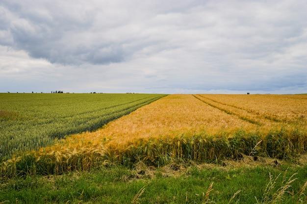 Bellissimo scatto di un campo vicino alla strada in germania