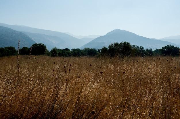 Bella ripresa di un campo con alberi e montagne boscose