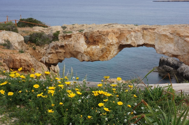 Beautiful shot of the flowers and a natural arch in the rock with the ocean in the background
