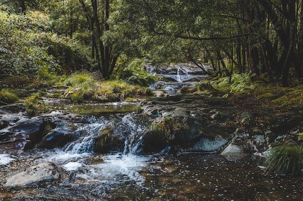 Bellissimo colpo di acqua di ruscello che scorre nella foresta