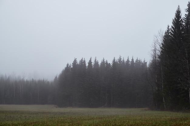 Bellissimo scatto di una foresta durante la nebbia