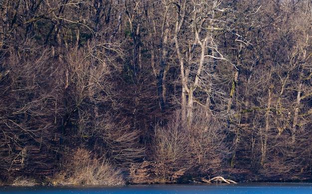 Bel colpo di foresta su una riva del lago nel parco maksimir a zagabria in croazia durante il giorno
