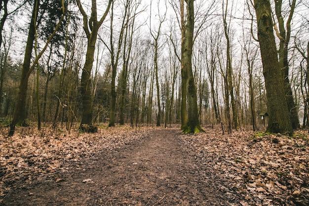 Bella ripresa di un sentiero nel bosco con un cielo cupo