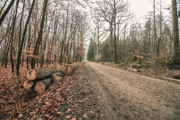 Beautiful shot of a forest road with a gloomy sky