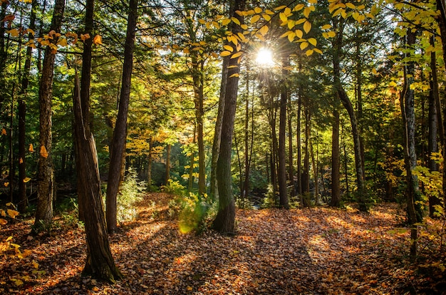 Beautiful shot of a forest with green trees and yellow leaves on the ground on a sunny day