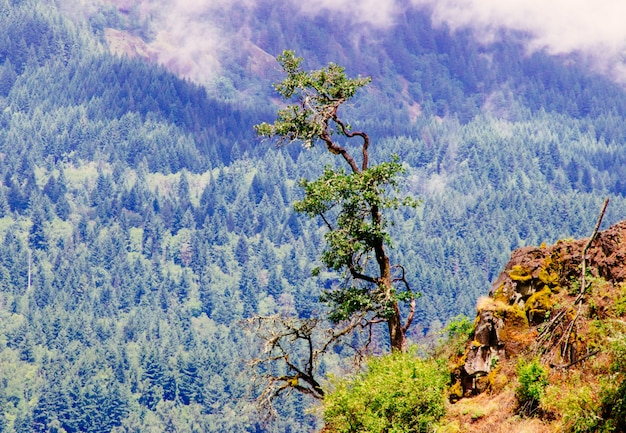 Beautiful shot from a cliff near a tree with a forested mountain