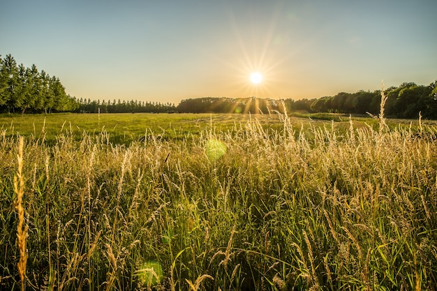 Beautiful shot of a grassy field and trees in the distance with the sun shining in the sky
