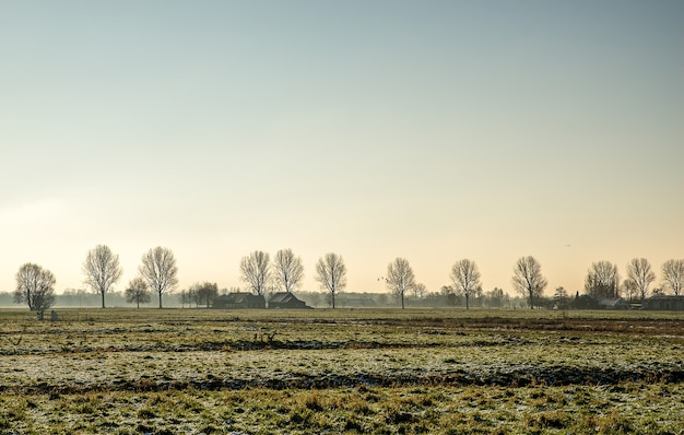 Beautiful shot of a grassy field with buildings in the distance near leafless trees