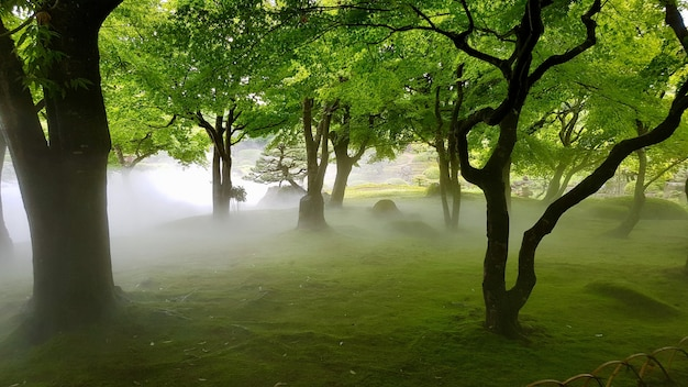 Bello colpo di un campo erboso con gli alberi in una nebbia