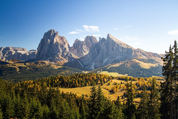 Beautiful shot of grassy hills covered in trees near mountains in dolomites italy
