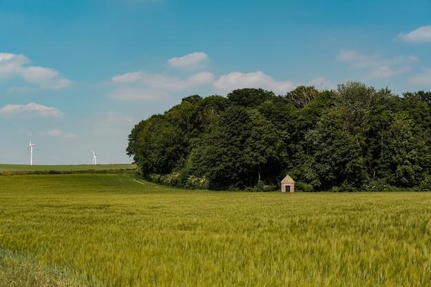 Bella ripresa di un terreno di erba verde con alberi sotto il cielo blu