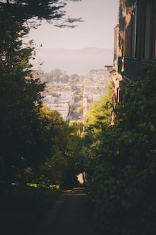 Beautiful shot of green scenery in the city of san francisco