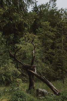 Bellissimo scatto del verde degli alberi della foresta